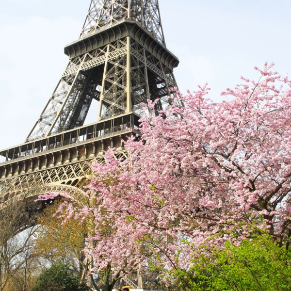 Eiffel Tower Spring 02 © French Moments