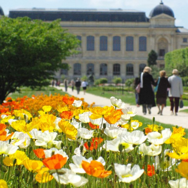 Flowers in Jardin des Plantes © French Moments